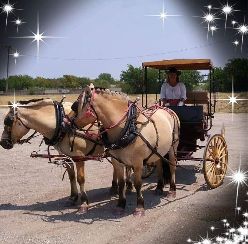 Tina Morris with T n T Ranch & Carriages